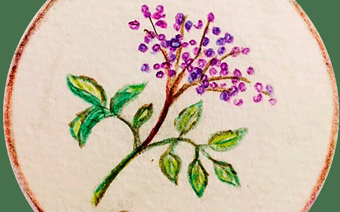 Le sureau – Magasin Bio de Bois Genoud